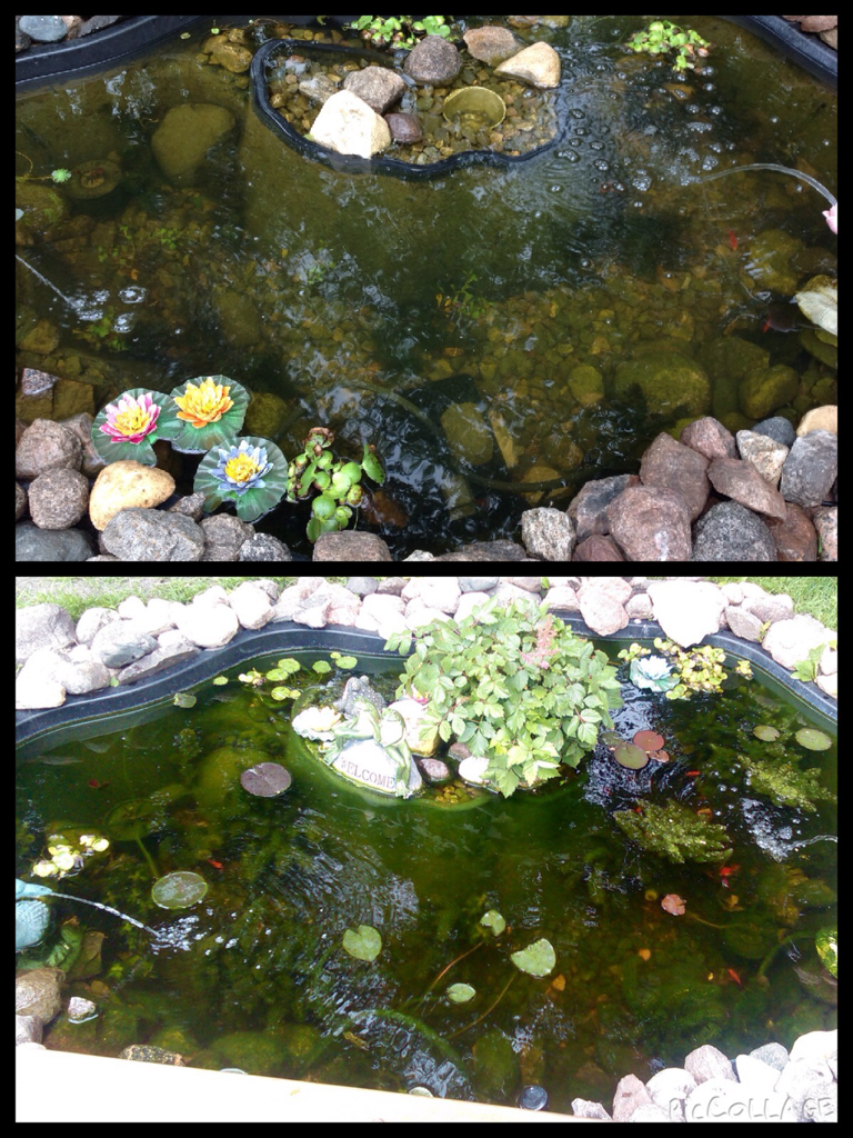 Pond page 3 homesteading forum for Koi pond hiding places