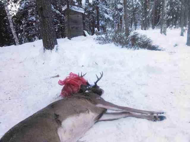Da Second Week Of Deer Camp Michigan Sportsman