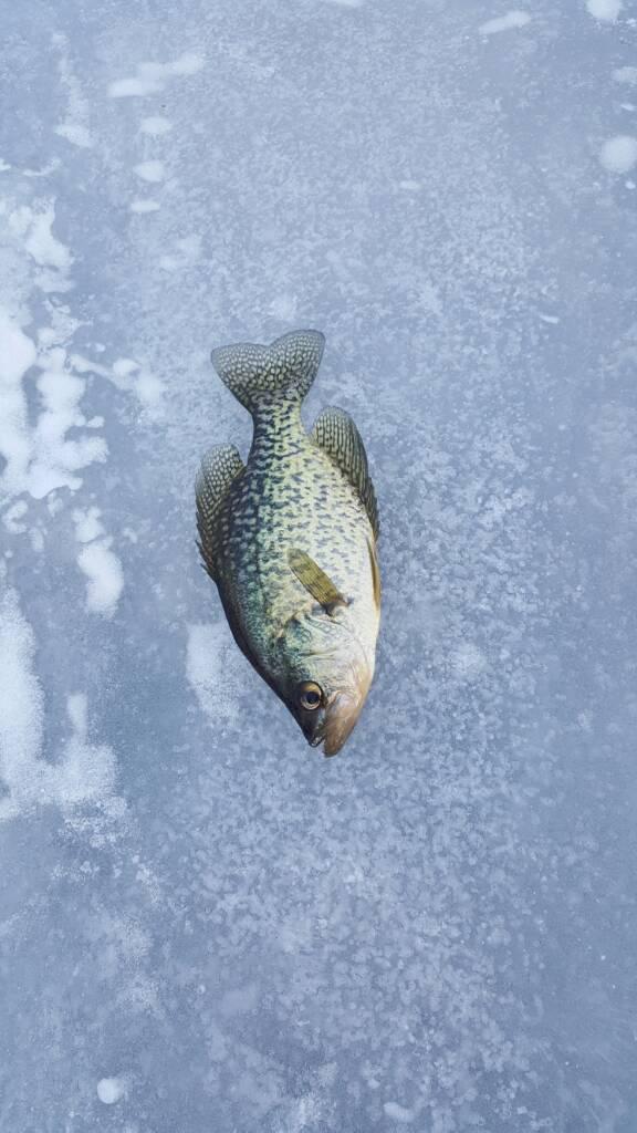 2016 2017 manistee county ice fishing thread michigan for Michigan fishing regulations 2017