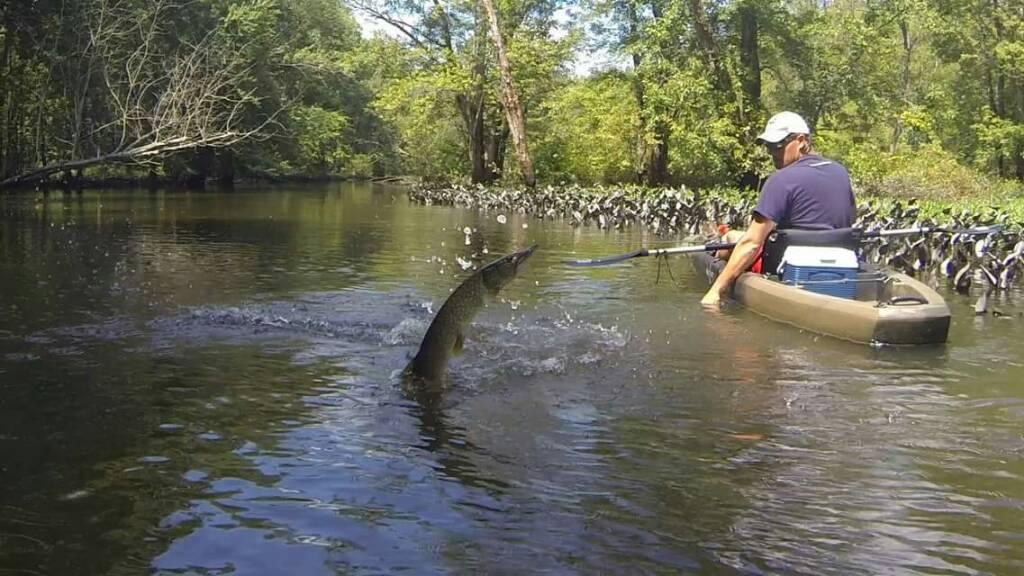 Cuyahoga float ohio game fishing your ohio fishing for Ohio game fishing